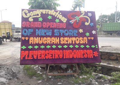 Bunga papan Lampung